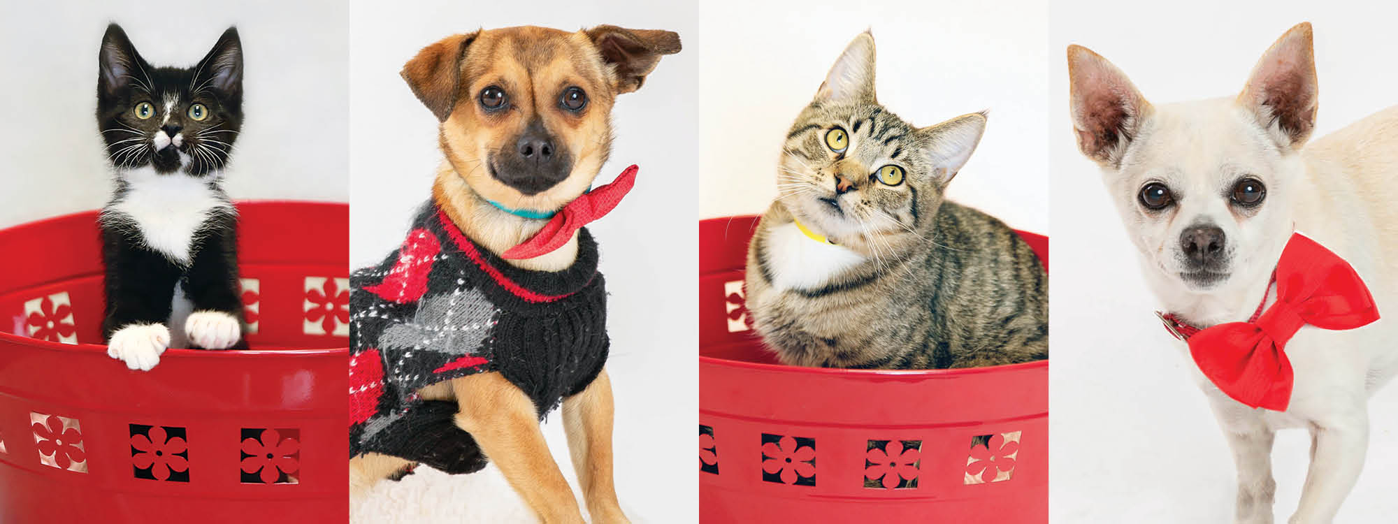 cats and dogs with red bowties